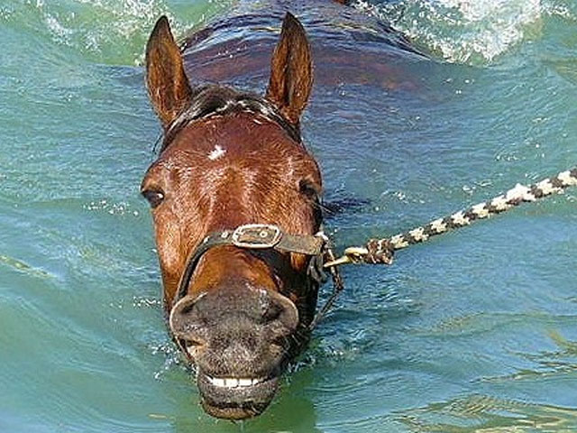 Image of Horse Aquatic at Kentuckiana Lodge