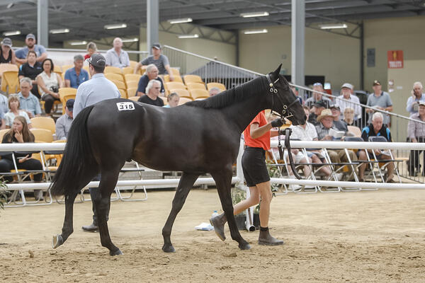 image of Yearling Sales Mission Accomplished For Kentuckiana